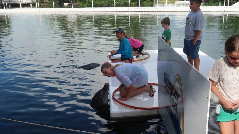 Dolphin Program in Keys with Transportation